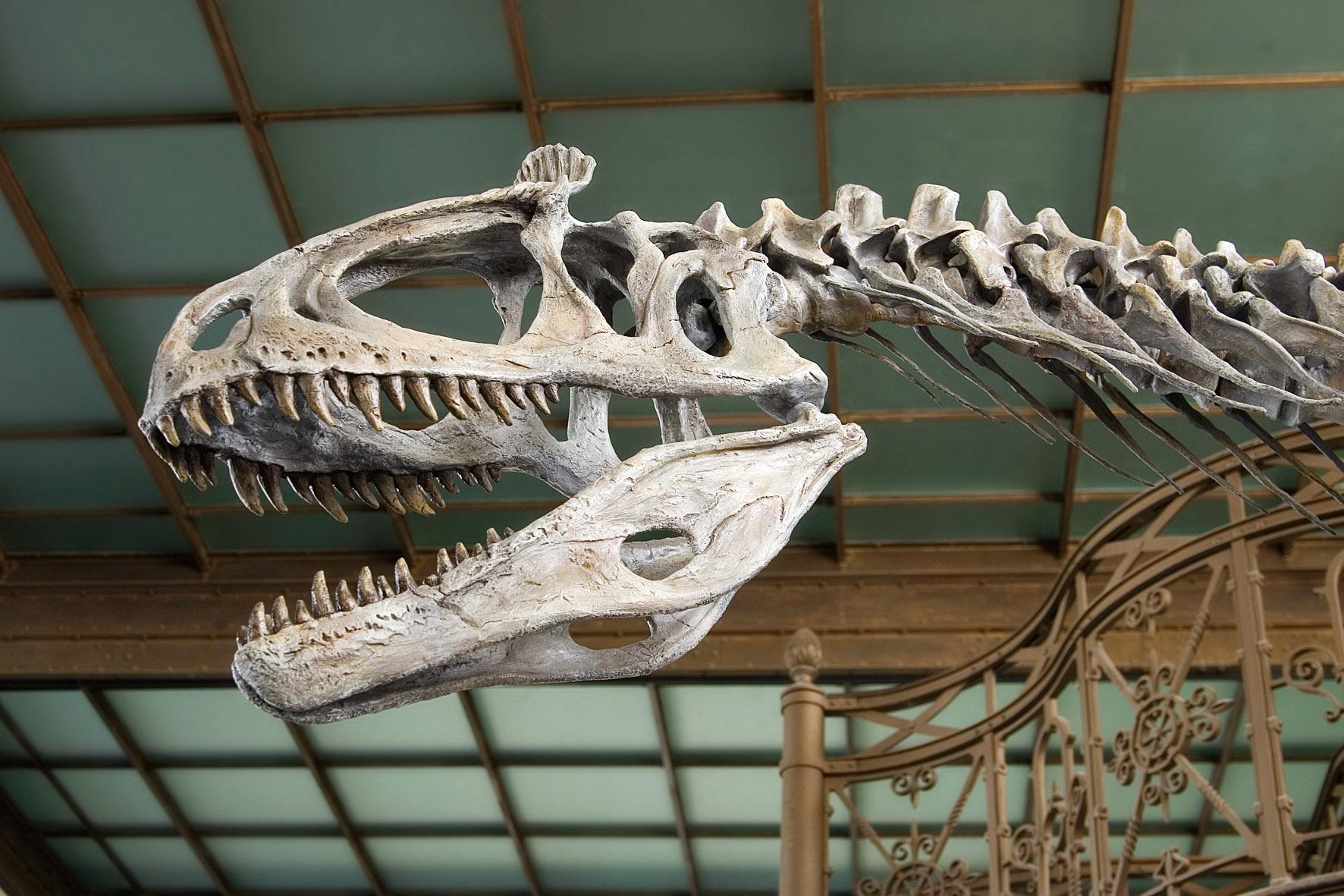 Dino tête Cryolophosaurus