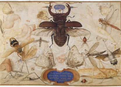 Insects and the Head of a Wind God The Metropolitan Museum of Art