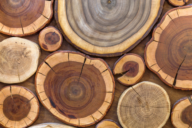 Round wooden unpainted solid natural ecological soft colored brown yellow crackled stumps tree cut sections with annual rings different sizes forms background texture 127089 2570